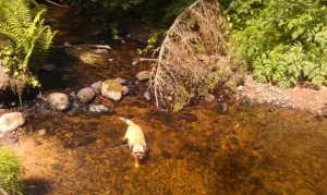 Branston Having A Paddle