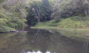 Millpond at Fairy Glen