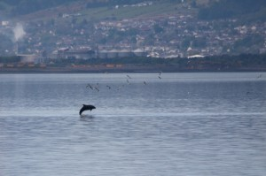 Dolphin At Beach Cottage B&B Inverness
