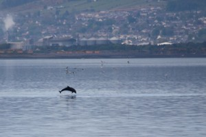 Dolphins At Beach Cottage B&B Inverness